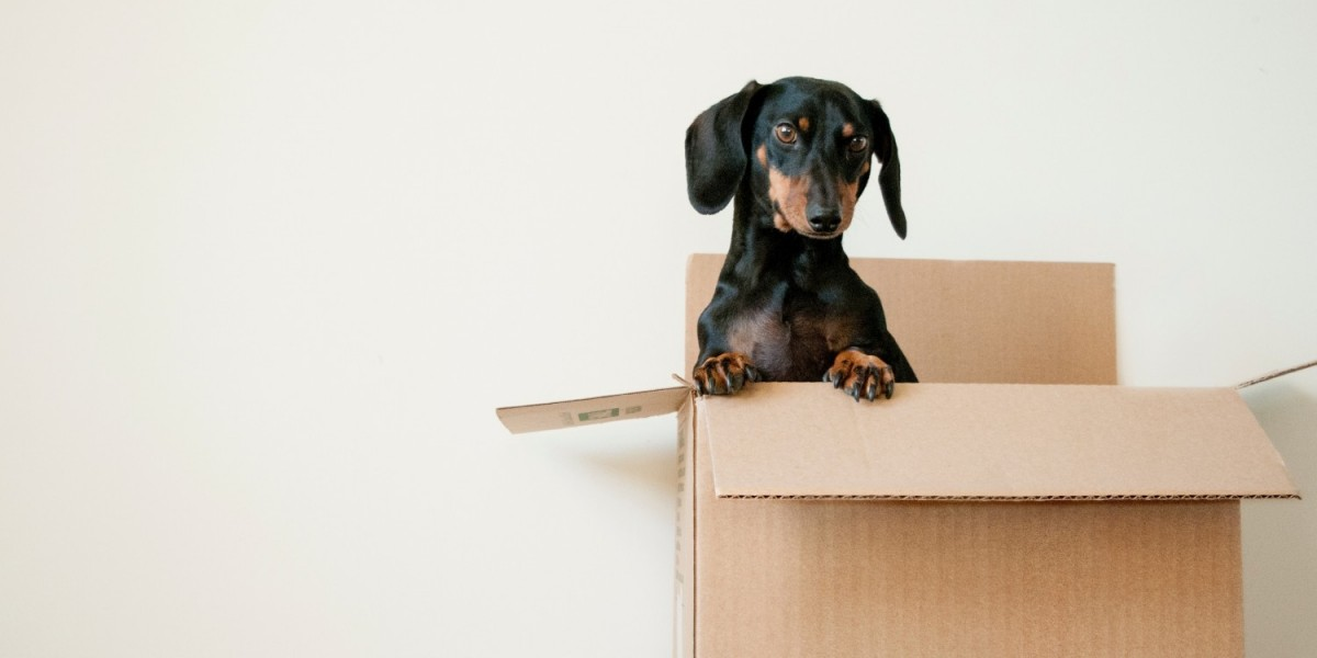 Moving a House with a Dog – All You Need to Know